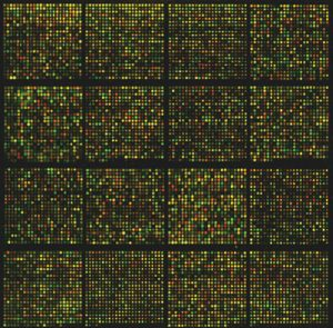Laser Scan DNA