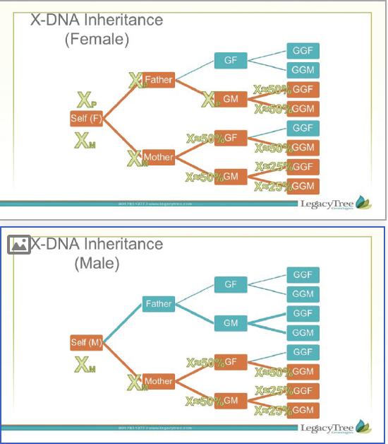 X-DNA genetic inheritance patterns