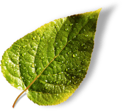 affiliate_leaves