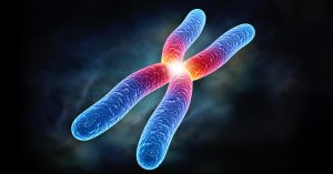chromosome browsers in genealogy