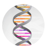what do my DNA test results mean? Schedule a DNA Consultation!