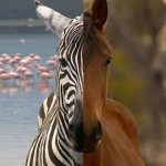 Horses Not Zebras: 5 Tips for Evaluating Conflicting Evidence