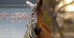 horses not zebras: resolving conflicting evidence